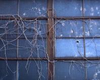 vinesfönster Royaltyfria Bilder