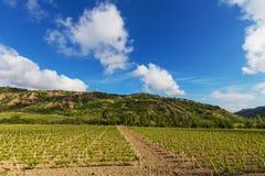 Vineuard. Vinery in Crimea Stock Images