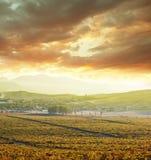 Vineuard. Vinery in Crimea Stock Photos