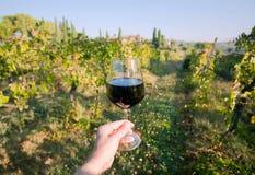 Vinexponeringsglas i hand och naturligt landskap med vinrankan av Tuscany Ängar av Italien på den soliga dagen arkivfoto