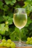 Vinexponeringsglas med iskallt vitt vin, utomhus- terrass, vintasti arkivbilder