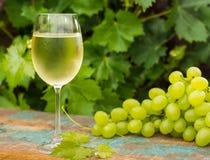 Vinexponeringsglas med iskallt vitt vin, utomhus- terrass, vintasti Arkivfoto
