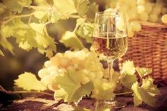 Vinexponeringsglas och druvor av vinrankan Arkivfoto