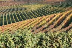 Vineyald de Langhe Imagenes de archivo
