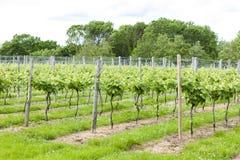 Vineyar, Kent, Anglia Zdjęcie Royalty Free