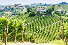 Vineyar, Piedmont Royalty Free Stock Photography