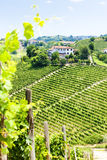 Vineyar, regione di Asti, Italia Fotografie Stock