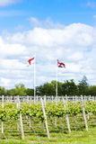 Vineyar, Risonanza, Inghilterra Fotografie Stock