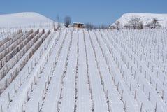 vineyar zima Obraz Stock