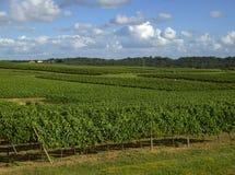 Vineyard 10 Stock Image