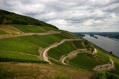Vineyard. View of the Rhein Vally and it's vineyard near Ruddesheim Stock Photo
