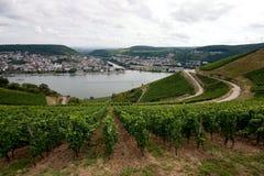 Vineyard. View of the Rhein Vally and it's vineyard near Ruddesheim Royalty Free Stock Image