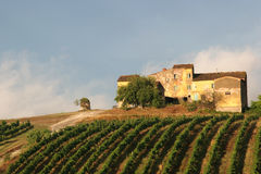 Vineyard. With old house Royalty Free Stock Photo