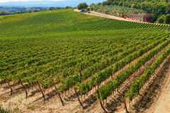 A vineyard. A vineyard at Chianti, Tuscany Stock Images