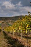 Vineyard. Fields with the hills and dark clouds on the background Royalty Free Stock Photos