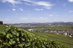 Vineyard. In Remich, Luxembourg during august Royalty Free Stock Photos