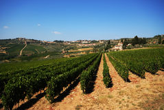 Vineyard. Looking though the growing vines - Italy Stock Images