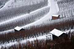Vineyard. With road and small houses in the winter Stock Photo