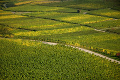 Vineyard. A Vineyard on a hill in germany stock photography