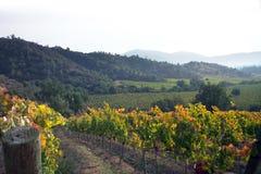 Vineyard royalty free stock photos