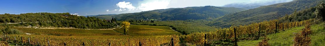 Vineyard. A panoramic view of a very large vineyard in the Chianti region, Tuscany, Italy during the autumn season. Image dimensions are 11500 pixels  x 1600 Stock Photo