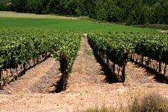 Vineyard Stock Photography