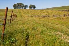 Vineyard. Overgrown vineyard in the early spring, Carneros Region, Napa, California stock photos