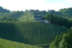Vineyard. Green vineyard idyll in the south of styria Royalty Free Stock Photos