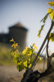 Vineyard. With old tower and closeup of leaves royalty free stock photography