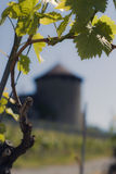 Vineyard. With old tower and closeup of leaves Stock Photo