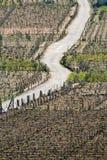 Vineyard -. Road between vineyards in Ribadavia, Galicia, Spain Stock Photo