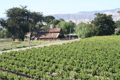 Vineyard. Large vineyard with farm house and mountains in the background Royalty Free Stock Photography