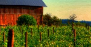Free Vineyard Stock Photo - 2539010