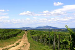 Vineyard. And field in wine country Velke Pavlovice,Czech stock photo