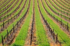 Vineyard. Symmetrical pattern of vines and green grass of a vineyard, Cape Town area, South Africa Stock Images