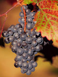 The vineyard Stock Images