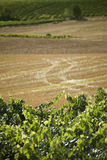 Vineyard. View of a vineyard in La Rioja, Spain Royalty Free Stock Photography