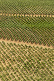Vineyard. S in La Rioja, Spain Stock Photo