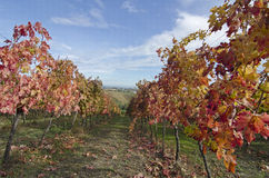 Vineyard Royalty Free Stock Images