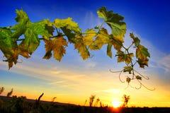 Free Vineyard Stock Images - 3383954