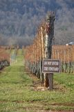 Vineyard. Row of grape vines in the mountains of Virginia Stock Photography