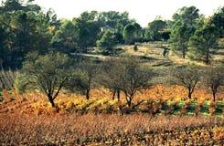 Vineyard 4. Vineyard in the provence Stock Photo