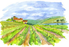 Vineyard. Art, vineyard, landscape, painting (watercolour royalty free illustration