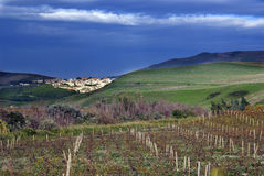 Vineyard. And little city in background - salaparuta - sicily Royalty Free Stock Image