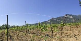 Vineyard. Rock and blue sky Royalty Free Stock Photo