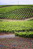Vineyard. Wine valley near the river main in germany Royalty Free Stock Photo
