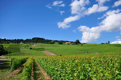 Vineyard. In Switzerland, blue sky Stock Image