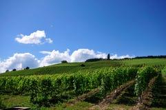 Vineyard. In Switzerland, blue sky Royalty Free Stock Photo