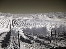 Vineyard. Rolling hills of a vineyard in southern california Stock Photos