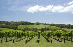 Vineyard Royalty Free Stock Images